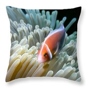 Clownfish 9 Throw Pillow by Dawn Eshelman
