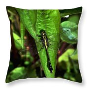 Club Tailed Dragonfly Throw Pillow