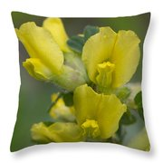 Clustered Broom Close Up Throw Pillow