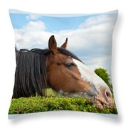 Clydesdale Horse Munching Throw Pillow