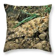 Coast Horned Lizard Throw Pillow