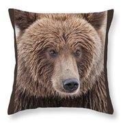 Coastal Brown Bear Closeup Throw Pillow