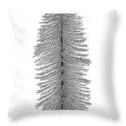 Coastal Redwood Throw Pillow