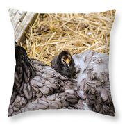 Cochin Hen And Chick Throw Pillow