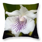Cochleanthes Aromatica Menehune Throw Pillow