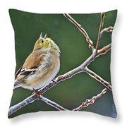 Cock-a-doodle-doo Gold Finch  Throw Pillow