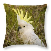 Cockatoo Portrait  Throw Pillow