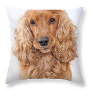 Cocker Spaniel Dog Portrait Throw Pillow