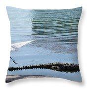 Crocodile In Cancun Throw Pillow