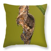 Cocooned Zebra Longwing Butterfly Throw Pillow