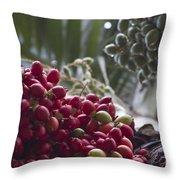 Cocos Nucifera - Niu Mikihilina - Palma - Niu - Arecaceae -  Palmae Throw Pillow