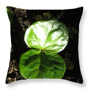 Coffee Plant The Shiny Thick Green Butterfly Look Plant Gives The Great Promise Of A Cash Crop To Th Throw Pillow