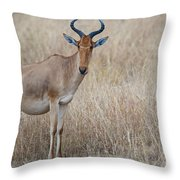 Cokes Hartebeest Throw Pillow
