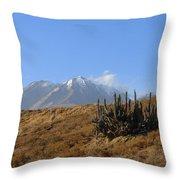 Cold Cactus Throw Pillow