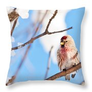 Cold Redpoll Throw Pillow