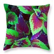 Coleus Color Throw Pillow