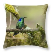 Colibri Thalassinus... Throw Pillow