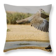 Collared Dove  Throw Pillow