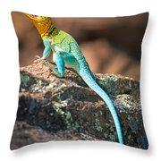 Collared Lizard Throw Pillow