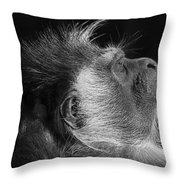 Colobus At Rest Throw Pillow