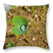 Colocasia Antiquorum Seedling And Water Droplet Throw Pillow