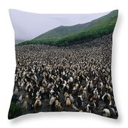 Colony Of Royal Penguin Eudyptes Throw Pillow