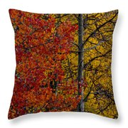 Color Changes Throw Pillow