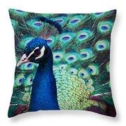 Color Me Peacock Throw Pillow