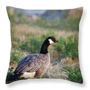 Colorado Canada Goose Throw Pillow