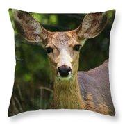 Colorado Deer Throw Pillow