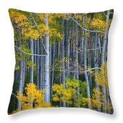Colorado Fall Color Throw Pillow