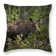 Colorado Moose Throw Pillow
