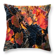 Colorful Autumn Grapes Throw Pillow