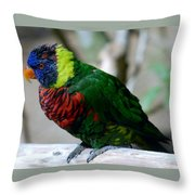 Colorful Bird  Throw Pillow