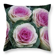 Colorful Cabbage  Throw Pillow