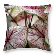 Colorful Coleous Throw Pillow