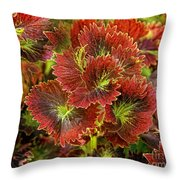 Colorful Coleus Throw Pillow