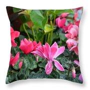 Colorful Cyclamen Throw Pillow