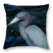 Colorful Egret Of Sanibel Throw Pillow