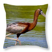 Colorful Glossy Ibis Throw Pillow