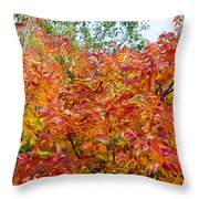 Colorful Leaves In Autumn Throw Pillow