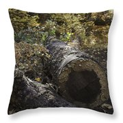Colorful Resting Place Throw Pillow