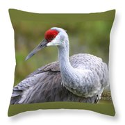 Colorful Sandhill Throw Pillow