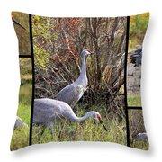 Colorful Sandhill Crane Collage Throw Pillow