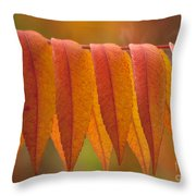 Colorful Sumac Foliage In Fall Throw Pillow
