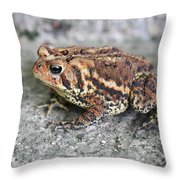 Colorful Toady Throw Pillow