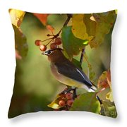 Waxwing In Fall Colors Throw Pillow