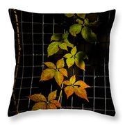 Colors Change Throw Pillow