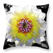 Colorwheel Throw Pillow