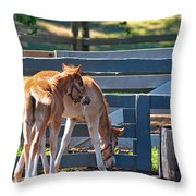 Colts At Play Throw Pillow